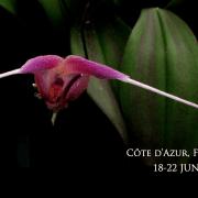 Flower Development workshop in Giens
